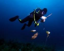 Certificados médicos buceo y pesca submarina clinica suecia Valencia
