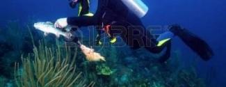 Certif. para pesca submarina Valencia Clínica Suecia